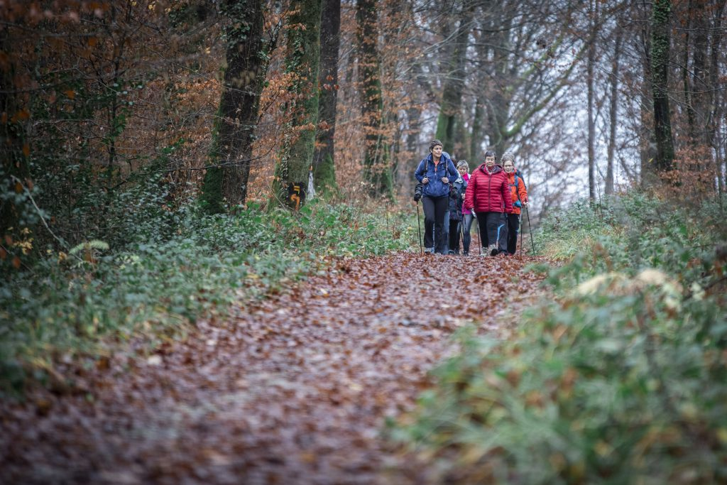 Six femmes pratiquent la marche nordique dans la forêt automnale